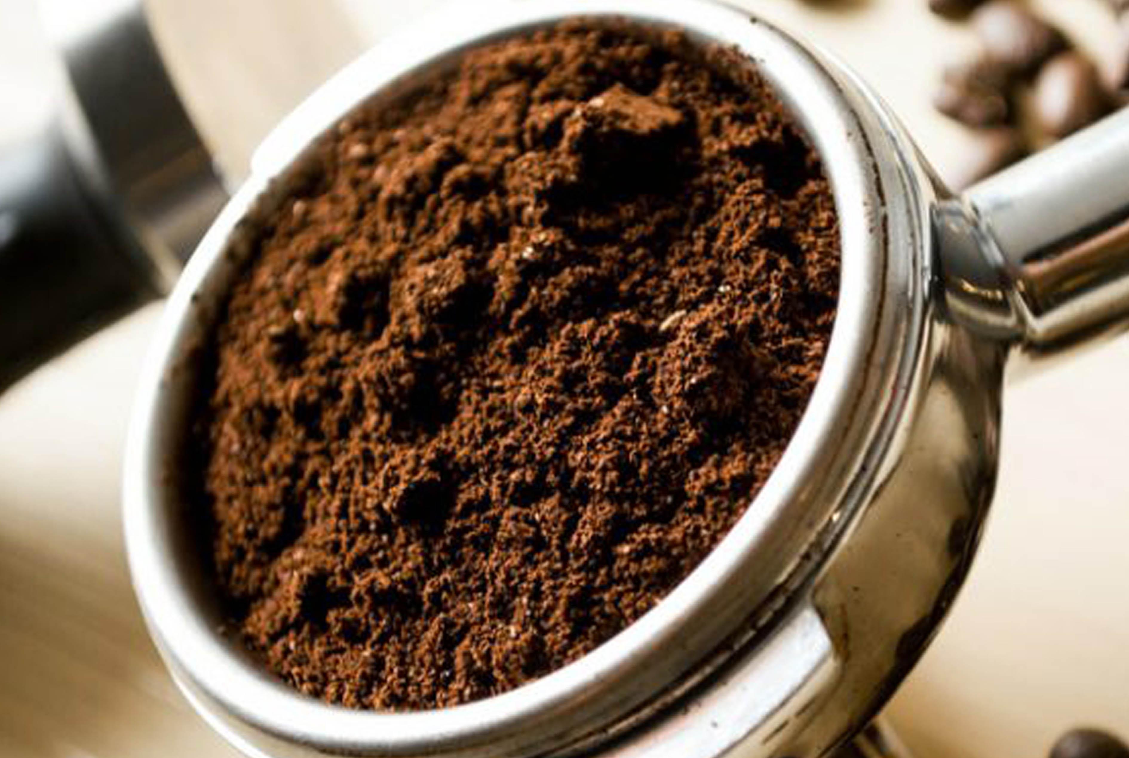 タイ北部チェンライ県で飲める!象から排出される最高級のコーヒー - ワイズデジタル【タイで生活する人のための情報サイト】
