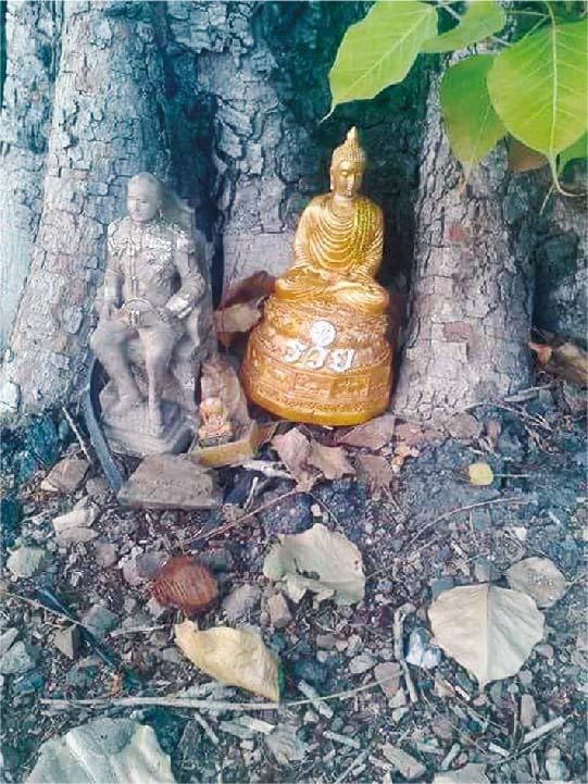 今週のギモン「なぜ、お寺の木の下には古い仏像が多いの?」