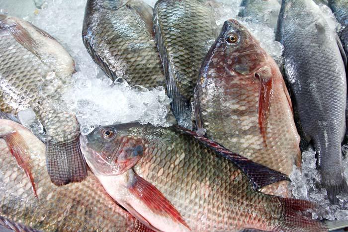 """""""プラーニン""""は日本の魚なの? - ワイズデジタル【タイで生活する人のための情報サイト】"""