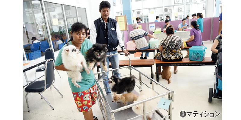 狂犬病対策でペット課税? - ワイズデジタル【タイで生活する人のための情報サイト】