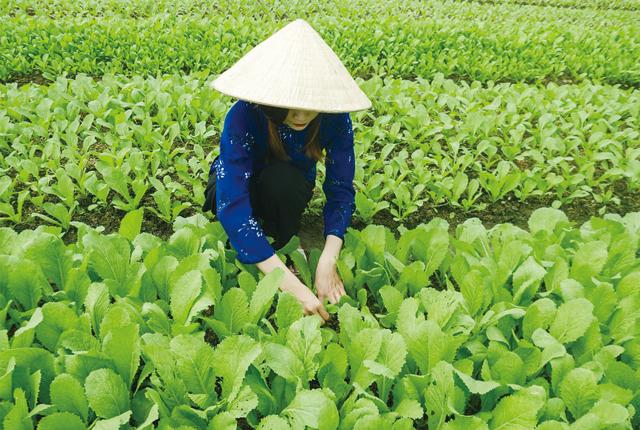 タイ農業4.0