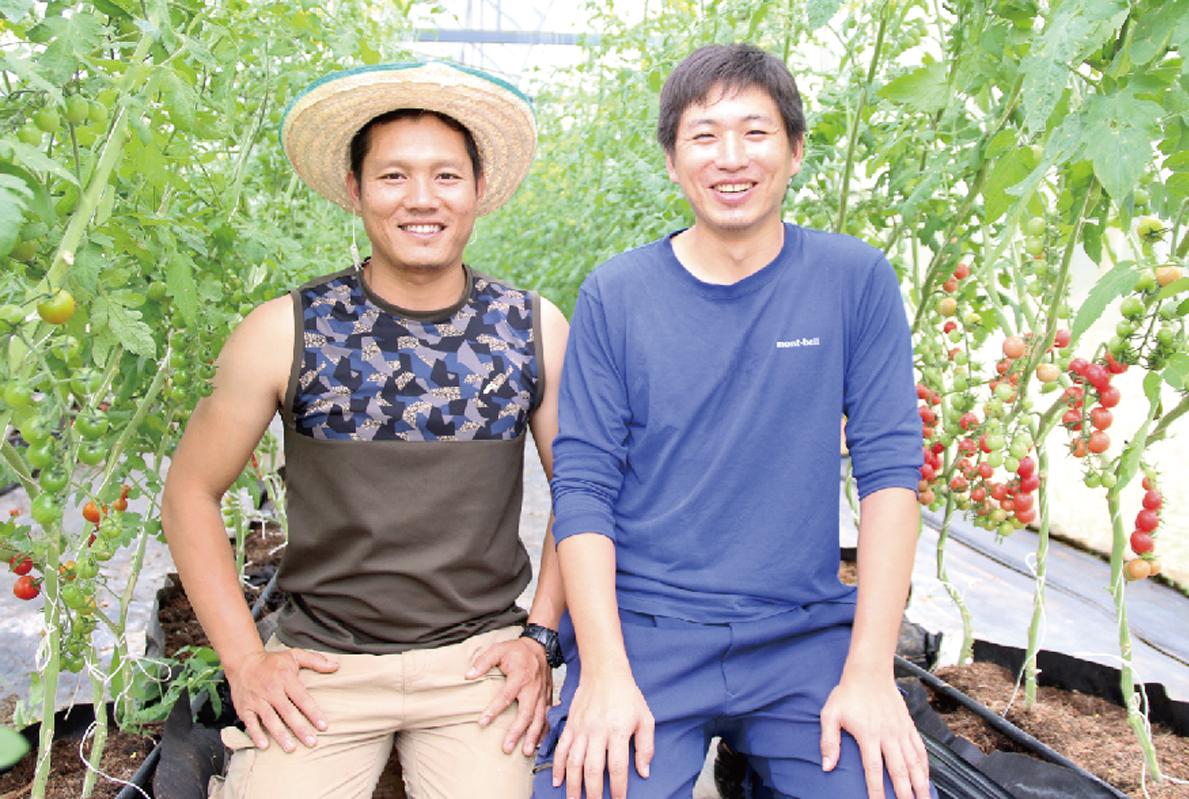タイに根づく農業の仕組みを 「bijin tomato」の挑戦