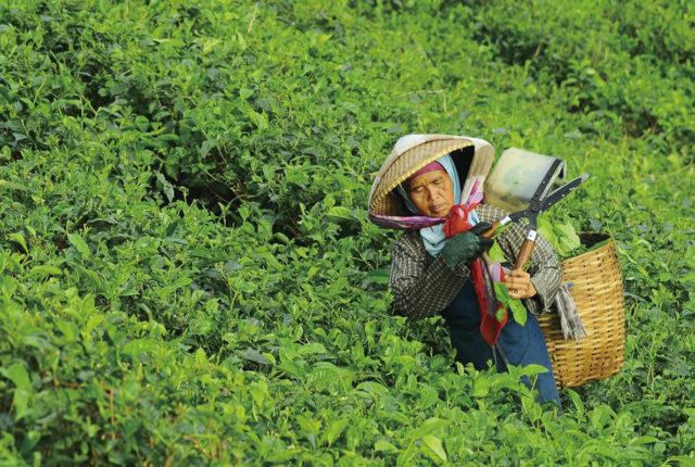 新たな農家支援策 - ワイズデジタル【タイで生活する人のための情報サイト】