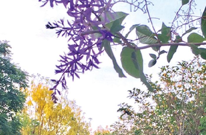 カラフルな花がいっぱい! 敷地内の散歩もおすすめ