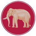 国の動物 チャーン・タイ(タイ象)