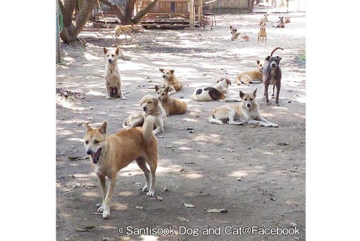 街のあちらこちらで目にする野良犬たち。無責任な飼い主が寺院の前に捨てたり、去勢手術をさせずに飼うため急増し、現在はバンコクだけでも15万匹を上回るのだとか。