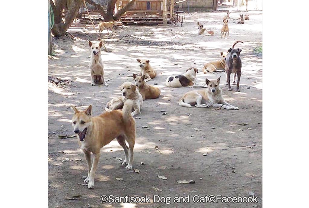 巷にあふれる野良犬増え続ける理由って? - ワイズデジタル【タイで生活する人のための情報サイト】