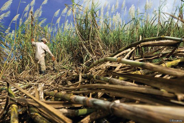 国民の40%が農業に従事し、米やサトウキビといった農産物の世界的な輸出国であるタイ。タイ政府は2003年より官民一体のプロジェクト「世界の台所」を掲げ、食品の品質や衛生管理などの普及を啓発。輸出や食品関連市場の拡大を推進している。
