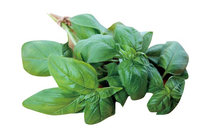 バジル 香りの成分に鎮静作用、殺菌・抗菌作用もある万能タイプ。蚊やハエが嫌う成分が含まれています。
