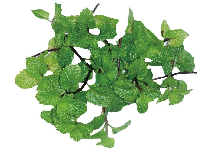 ペパーミント 清涼感のある、少し強い香りが特徴。虫が嫌う成分「メントール」を多く含んでいます。
