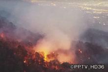 森林火災は、ひとたび燃え始めるとその被害が甚大となることが多い。3月14日そんな災害がチェンマイの「ドイステープ・プイ国立公園」発生してしまった。