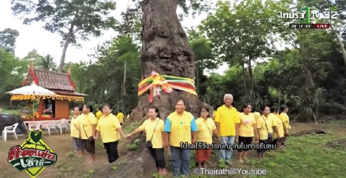 """平均樹齢は数百年、高さ数十メートルにも成長するという巨大な木「タキアン」は、タイ人の間では古くから""""精霊が宿る木""""として言い伝えられています。"""