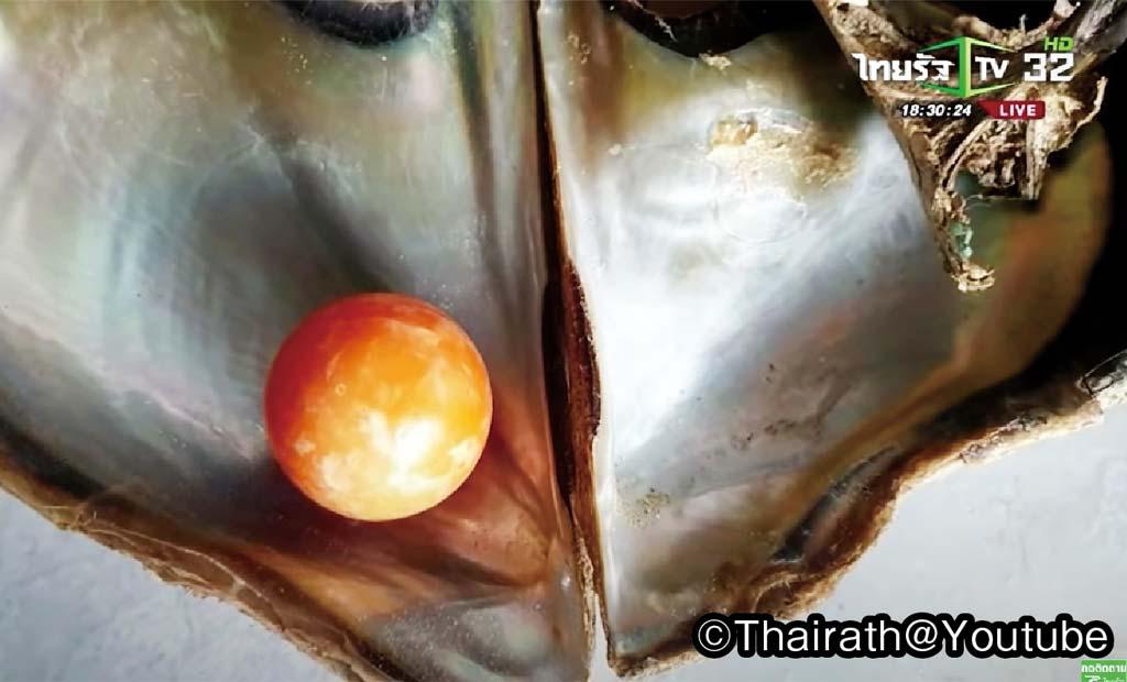 世にも滑稽な真珠ものがたり - ワイズデジタル【タイで生活する人のための情報サイト】