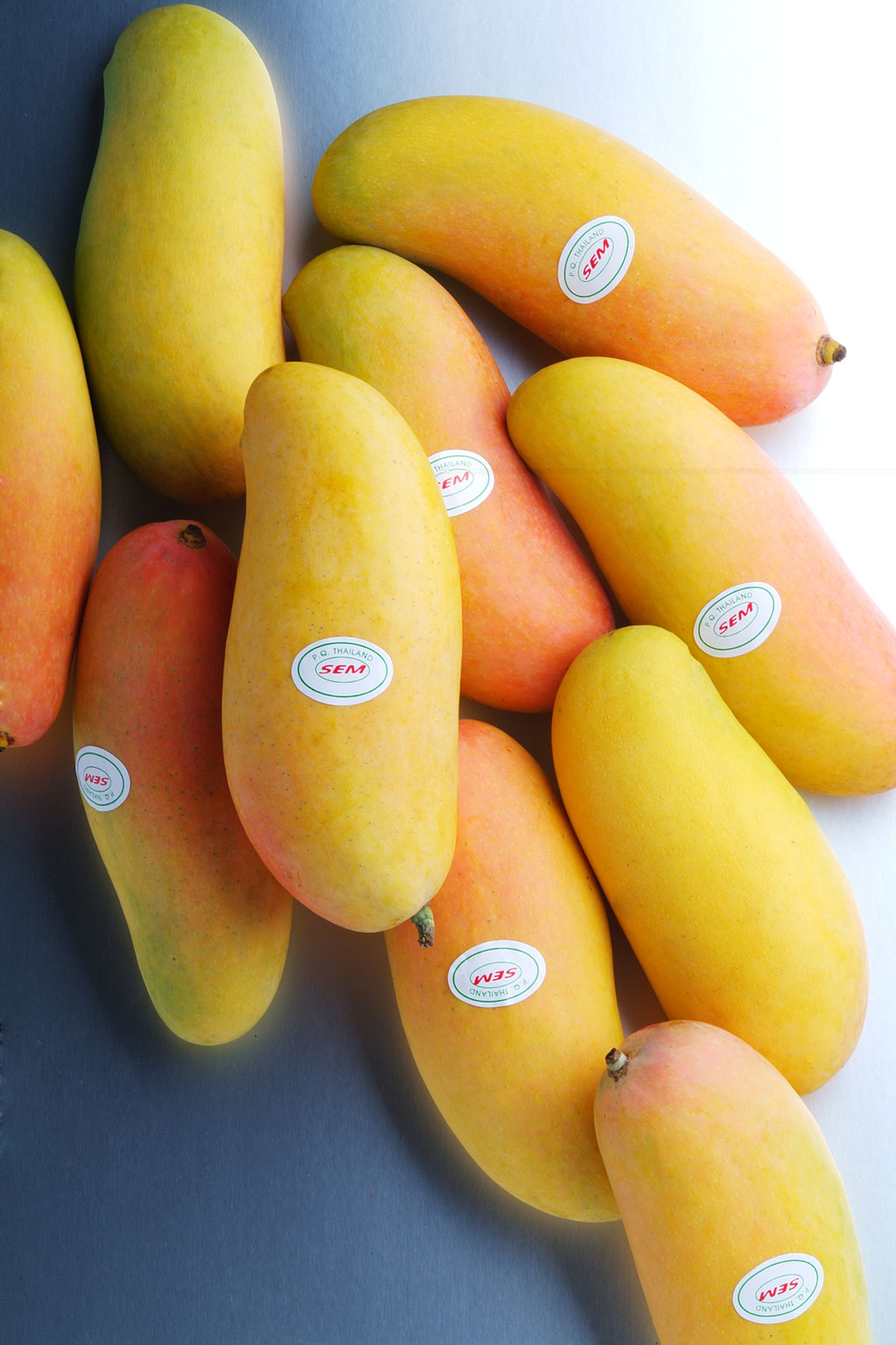 """マハチャノ種【ベストシーズン:4〜5月】 国内市場でも稀少な「マハチャノ種」はタイのオリジナル品種。""""タイ国民の父""""と慕われたラマ9世前国王陛下の即位60周年を記念し、2006年より日本への輸出が解禁されました。アップルマンゴーとの交配種で、華やかな香りが印象的です。"""