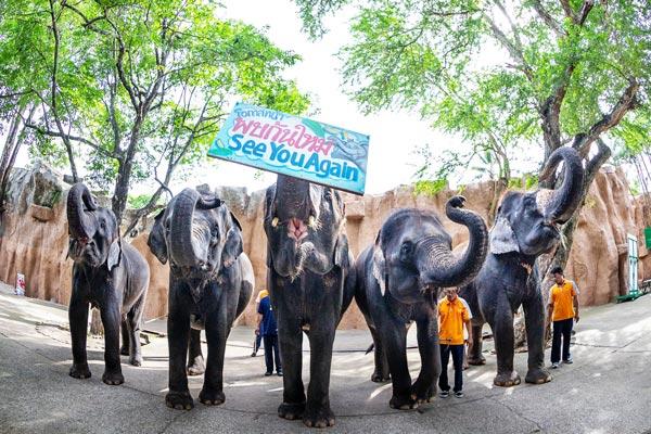 「シラチャタイガーズー」が11頭のゾウを売りに - ワイズデジタル【タイで生活する人のための情報サイト】