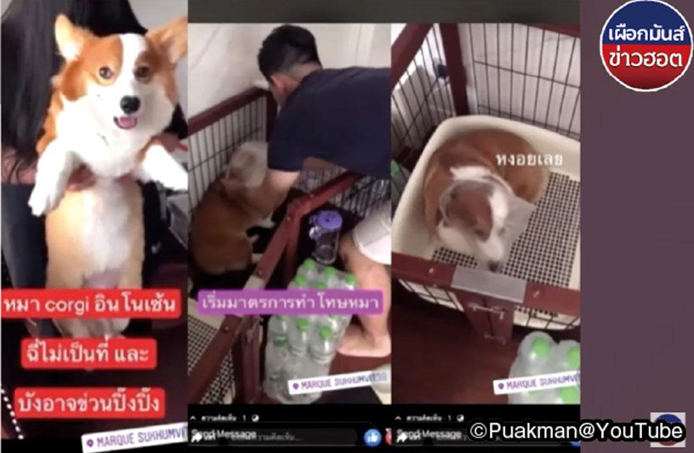 有名女優が飼い犬虐待で大炎上 - ワイズデジタル【タイで生活する人のための情報サイト】