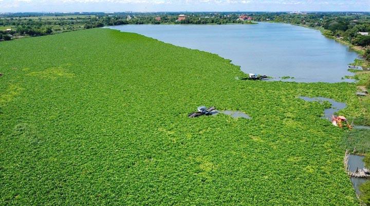 猛暑で異常繁殖の水草を一斉除去チャオプラヤー川支流の川面蘇る - ワイズデジタル【タイで生活する人のための情報サイト】