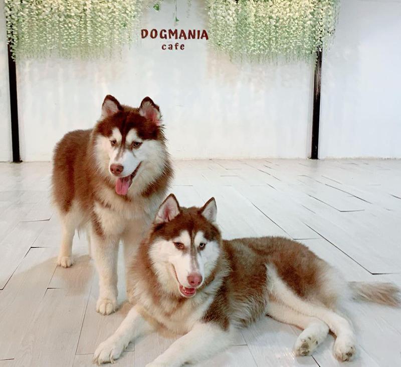 DOG MANIA Café(ドッグ・マニア・カフェ) - ワイズデジタル【タイで生活する人のための情報サイト】