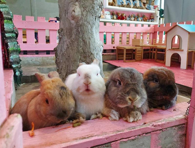 Rabbit Café(ラビット・カフェ) - ワイズデジタル【タイで生活する人のための情報サイト】